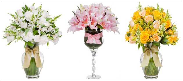 Verbena Flores